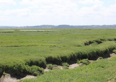les marais salés le crotoy 5